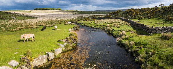 Dartmoor landscape, Devon, England, United Kingdom, Europe