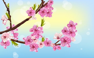 Cherry flowers Vector. Spring card background decors