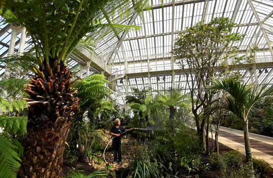 A gardener waters plants inside the newly restored Victorian Temperate House which has been re-opened to the public following a five year restoration programme in Kew Gardens, London, Britain