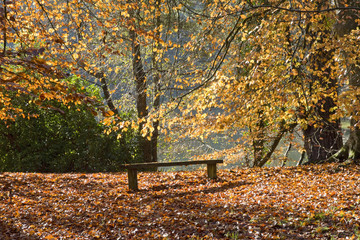Wooden Bench Amongst Autumn Trees In Forest