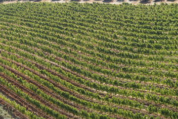 High Angle View Of Vineyards In Franschhoek Region Of Western Cape In South Africa