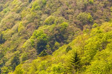 山に生える新緑の木