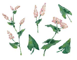 Buckwheat plant oil painting illustration.