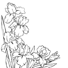 vector contour iris  flowers coloring book pattern half border frame