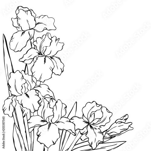 vector contour iris flowers coloring book pattern half border frame ...