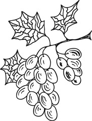 Hand Drawn Doodle Sketch Line Art Vector Illustration of Bunch of Ripe Grape. Emblem Poster Banner Black Outline Design Element Template