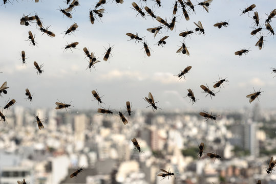 Plague of ants
