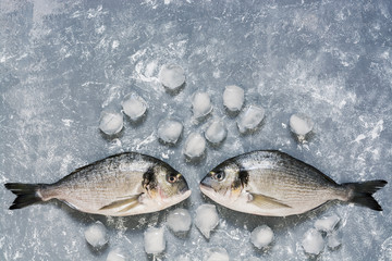 Fresh Dorado fish on a gray background with ice, top view. Two raw fish look at each other. Copy space.