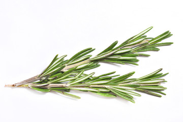 Branch of fragrant and fresh rosemary on white background, close-up