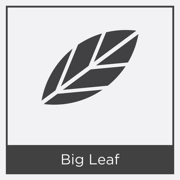 Big Leaf icon isolated on white background