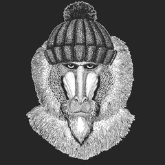 Cute animal wearing knitted winter hat Monkey, baboon, dog-ape, ape Hand drawn image for tattoo, emblem, badge, logo, patch