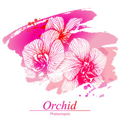 Floral design with orchid flowers. Artistic vector background (template) for your card, flyer, invitation etc.