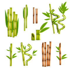 Bamboo Realistic Set