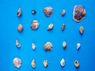 Seashells pattern on blue background