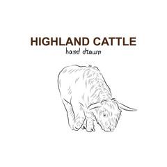 Sketch of highland cattle. Handmade drawn.
