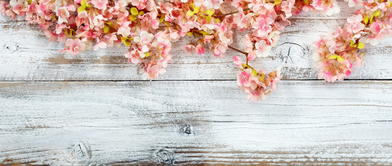 Blooming cherry blossom flowers on white vintage wood in overhead view for spring concept