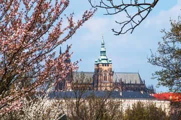 St Vitus Cathedral in Spring Time. Prague