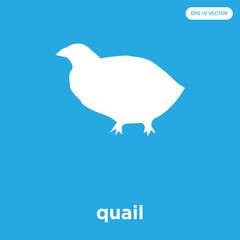 quail icon isolated on blue background