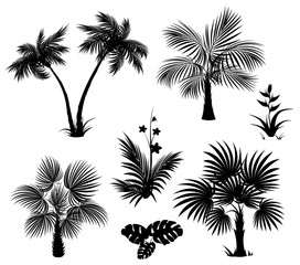 Palm trees, flowers and leaves, black silhouettes