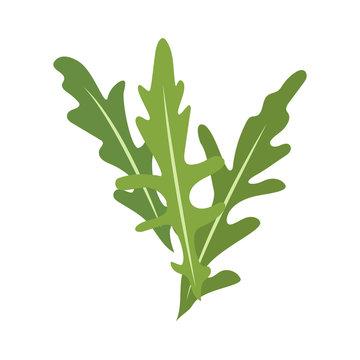 Rucola or arugula icon
