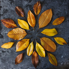 Yellow magnolia leaves in mandala shape flat lay on dark background