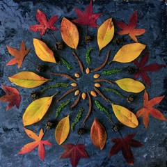 Autumn leaves in mandala shape flat lay on dark background. Natural meditative technic for calm down
