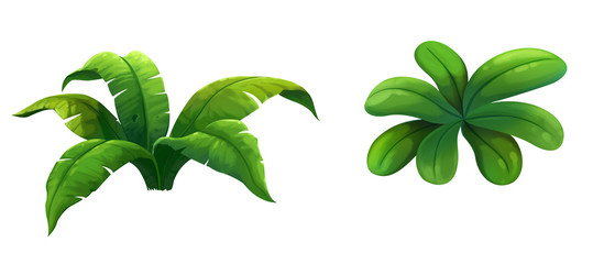 illustration shrub for cartoon isolated on white background