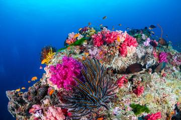 Keuken foto achterwand Koraalriffen Beautiful, colorful tropical coral reef in asia