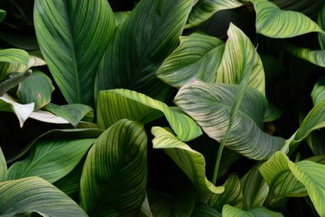 Fresh Plants Background