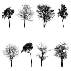 Collection of tree silhouette set on white background