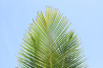 Fresh green palm leaf over blue sky Wall mural