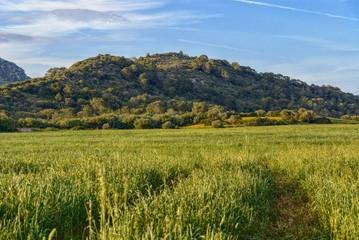 mercadal countryside, menorca, balearic islands, spain