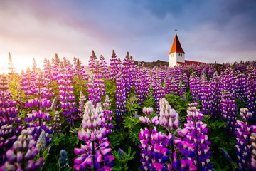 Wall Mural - Great view of the church in evening light. Location Vik village, Iceland, Europe.