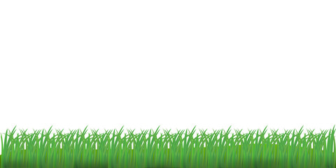 Grass isolated on white background. Vector illustration.