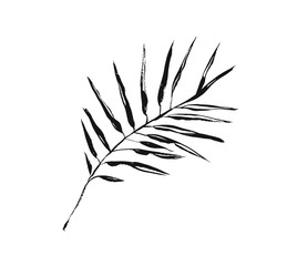Hand drawn vector abstract artistic ink textured graphic sketch drawing illustration of exotic tropical palm leaves branch plant isolated on white background