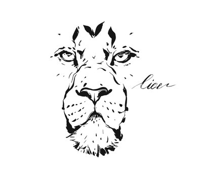 Hand drawn vector abstract artistic ink textured graphic sketch drawing illustration of wildlife lion head isolated on white background