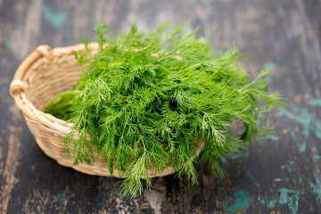 bunch of dill on the dark