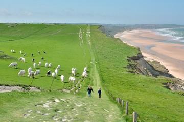 Deux jeunes filles marchent près des vaches sur le sentier des falaises du site des 2 caps entre le cap Blanc-Nez et Wissant. Hauts-de-France