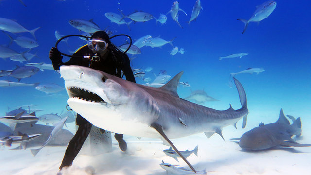 Portrait of a diver giving food to a shark. Concept: Holidays, nature, passion