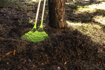 Rake and pine needles of the tree
