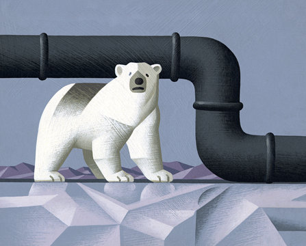 Polar bear and pipeline