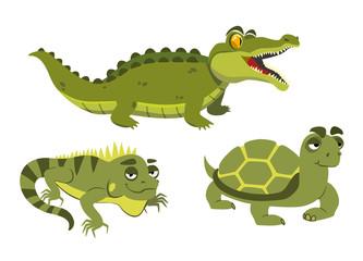 alligator, iguana and turtle on white background