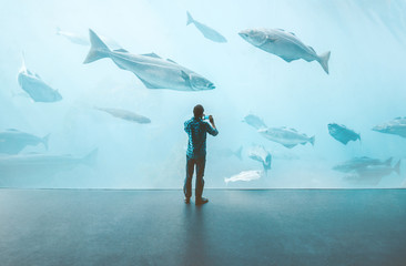 Man standing alone in big aquarium watching fishes taking photo by smartphone Travel lifestyle concept