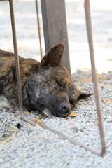 Bown dog sleeping on gravel floor.