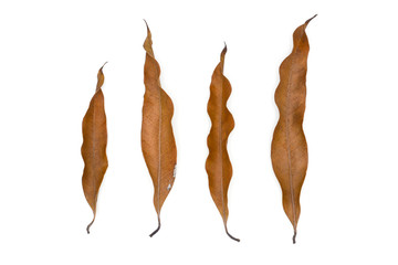 Fototapete - dry brown mango leaves isolated on a white background