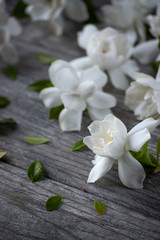 gardenia blossoms on old gray wood