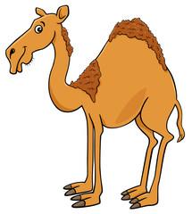 dromedary camel cartoon animal character