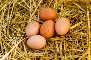 natural brown chicken eggs lie on the straw