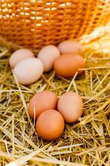 chicken eggs lie on the hay near the wicker basket