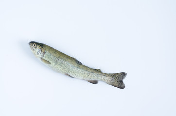 Trout on white background turned upwards. Top view.